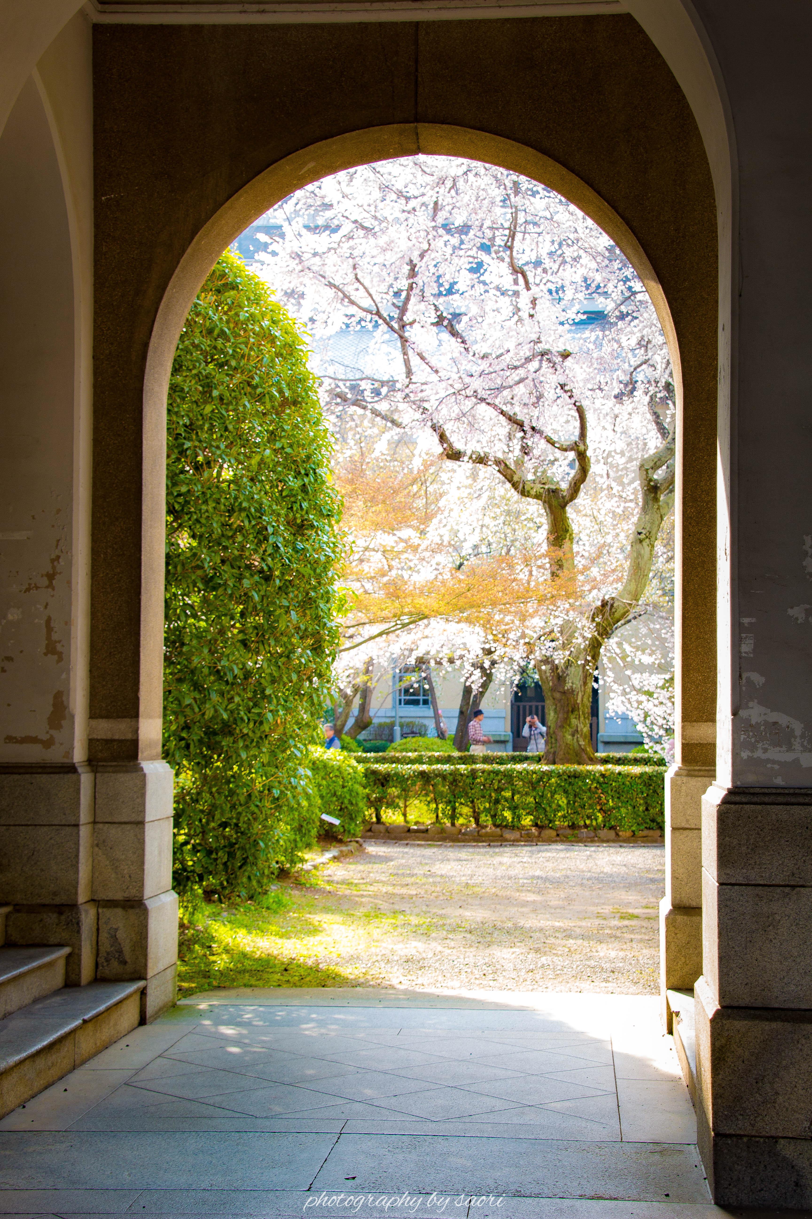 異世界へ続く通り道〜京都の桜を愛でる旅②
