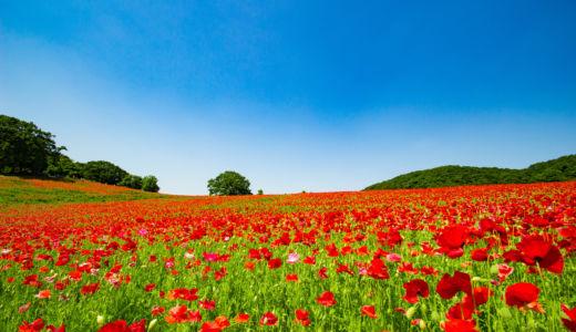 一面 赤の世界〜天空のポピー 秩父高原牧場
