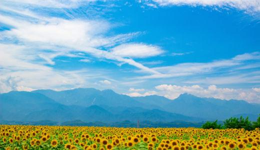 夏の絶景!日本一のひまわり畑〜山梨 明野