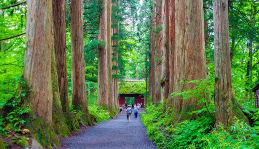 樹齢400年の杉並木が圧巻〜長野 戸隠神社奥社参道の杉並木