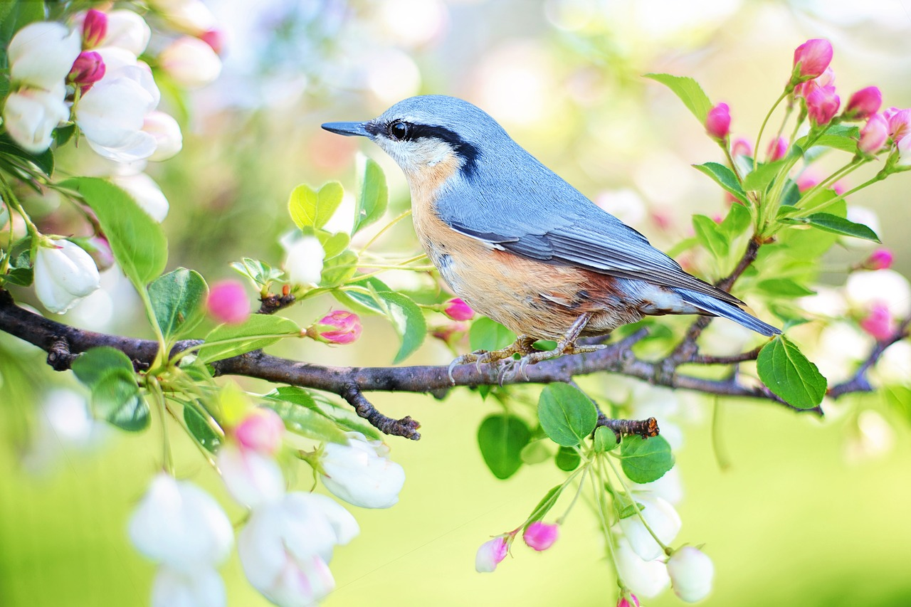 3分間の物語vol.3「青い鳥」
