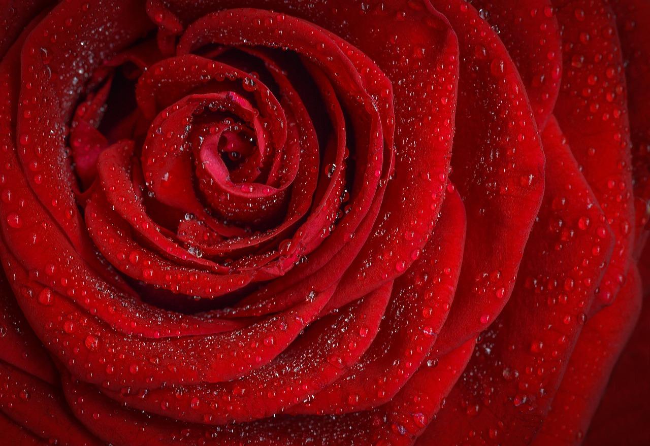 3分間の物語vol.42「紅い花」