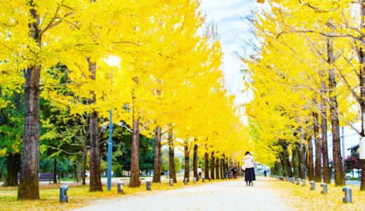 黄金色のイチョウ並木〜岐阜県各務原市 学びの森