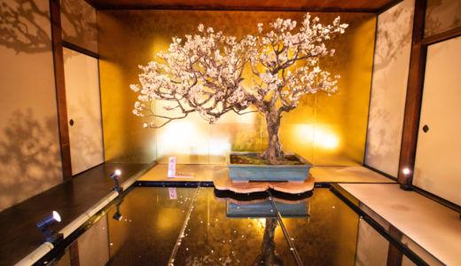 歴史・規模ともに日本一!滋賀県の長浜盆梅展にいってきました!