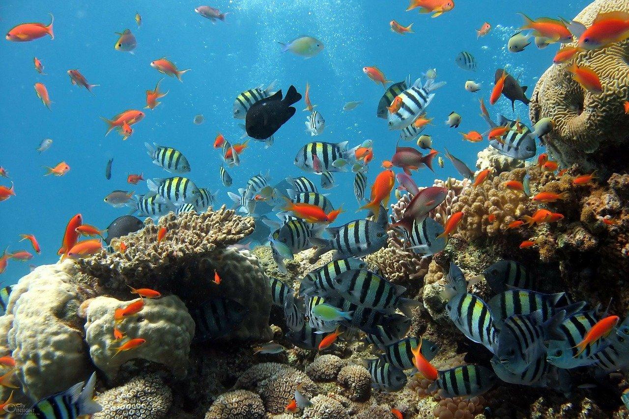 3分間の物語vol.443「溺れる金魚」