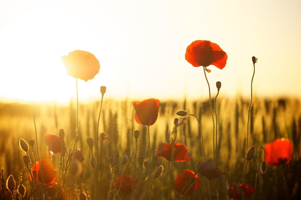 3分間の物語vol.486「Sun rise Sun set」