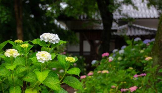 愛知のあじさい寺として有名な『音楽寺』